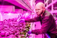 Philips pone luz LED a la carta para cultivar en interiores