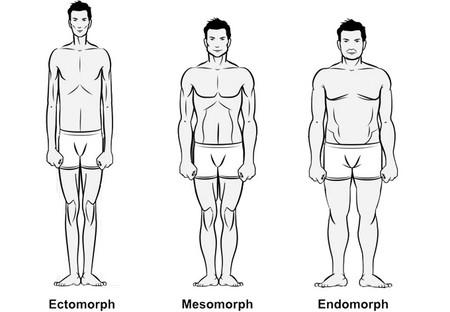 somatotipos
