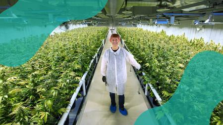 Cannabis Careers Canada