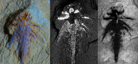 Este diminuto fósil nos dará gran información sobre la diversidad del Cámbrico