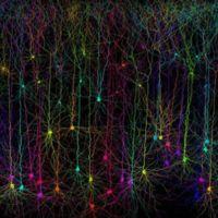 El adenosín trifostato potencia nuestras células, pero también las supercomputadoras biológicas del futuro