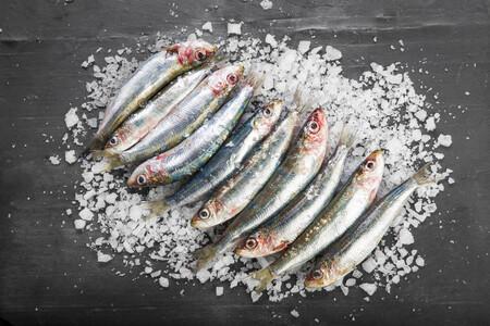 sardina parrocha lacha