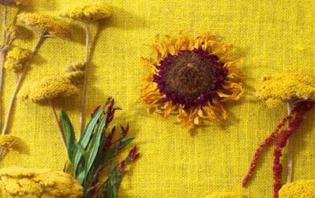 Taller de botánica artística NaCoNi en el Museo Nacional de Ciencias Naturales