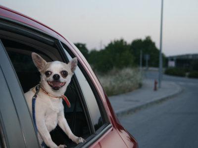 Si quieres cuidar a tu mascota en tu coche este verano esto es para ti