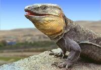 Canarias y el Día Internacional de la Biodiversidad