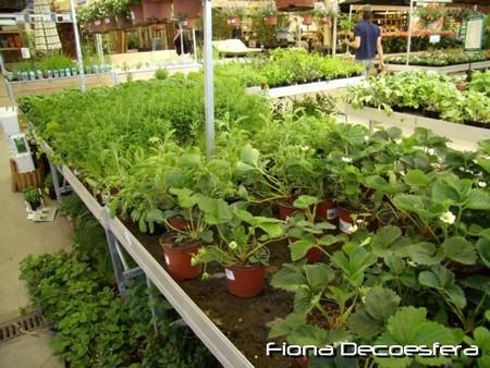 Contenedor de plantas aromáticas