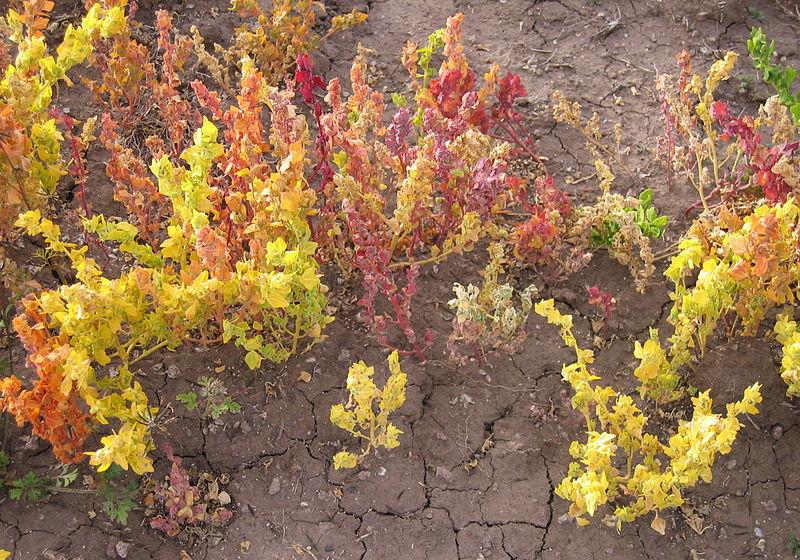 Todo sobre la ka iwa propiedades beneficios y su uso en for Cuanto se cocina la quinoa
