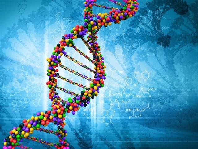 Nuevos cálculos indican que el 75% de nuestro genoma es 'basura'