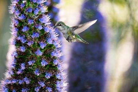 Jardines urbanos en CDMX, el proyecto que busca evitar la extinción de los colibríes en México y el mundo