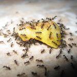 Hay 2 millones de personas en Facebook fingiendo todos los días que son hormigas en una colonia
