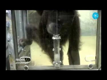 El dilema del tubo y el cacahuete: comprendiendo la mente de los cachorros humanos