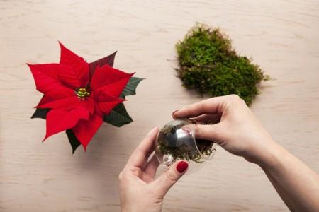 1 Von 4 Christbaumkugel Mit Dem Weihnachtsstern Schritt 1 Es