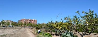 Los huertos urbanos son un peligro para la salud pública. O nos los tomamos en serio o tendremos un problema