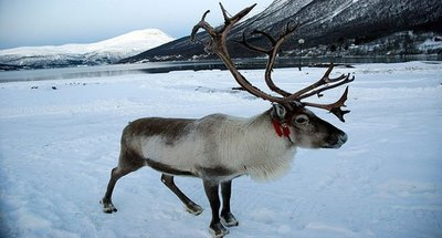 Inari, viaje a la cultura sami