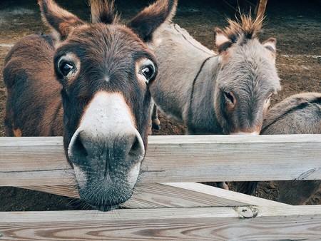 Donkey 1725231 960 720