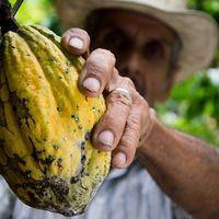 Manos de cacao: las barras de chocolate orgánico, sustentable y mexicano