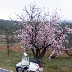Foto 6 de 8 de la galería la-ruta-fallida-de-los-almendros-en-flor en Motorpasion Moto