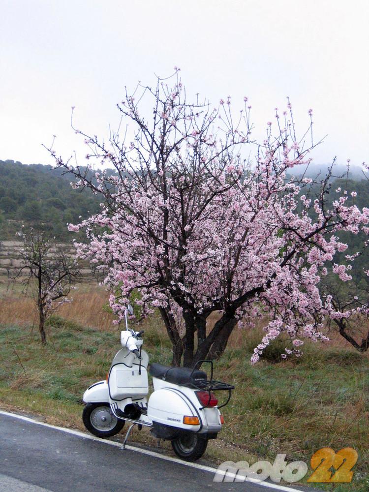 La ruta (fallida) de los almendros en flor