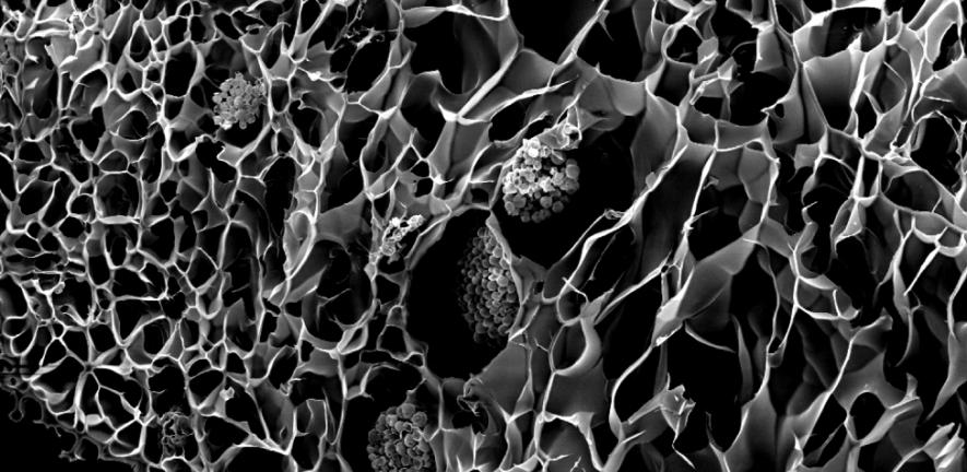 Estos 'corales biónicos' se han impreso en 3D y pueden ayudar a la fotosíntesis de los arrecifes