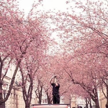 Los 11 mejores lugares del mundo para ver el espectáculo de los cerezos en flor (más allá de Japón)