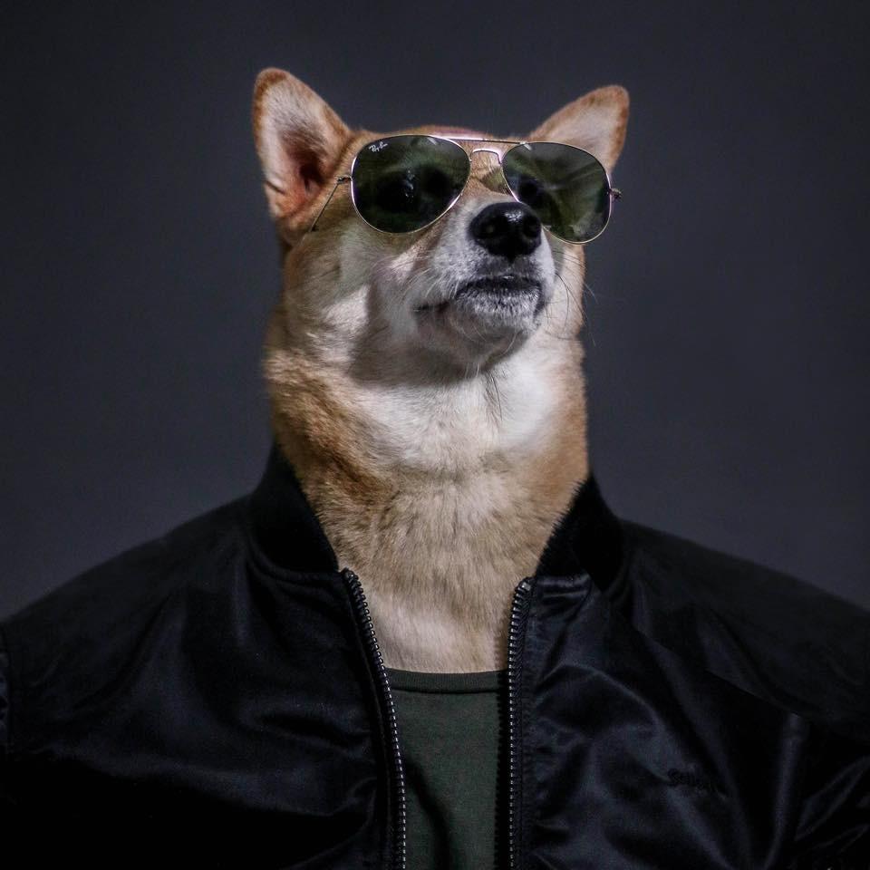 Las 7 mascotas más rentables de la historia de Internet
