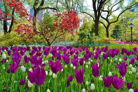 Central Park primavera