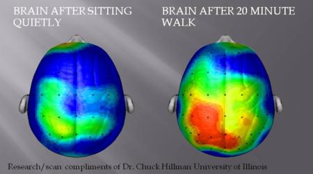 actividad cerebral ejercicio