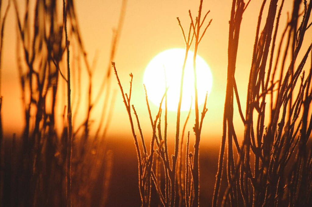 El 2020 ha empatado con 2016 a año más caluroso de la historia desde que se tienen registros, según los datos de la NASA