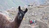 Saludos desde Machu Picchu
