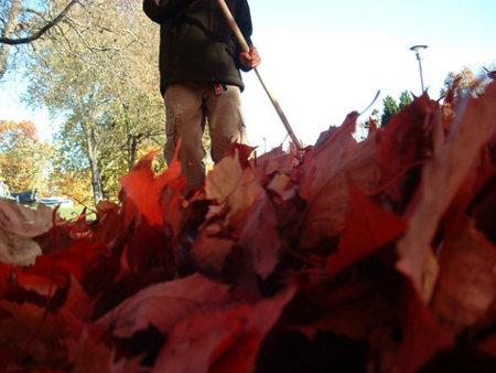 En otoño, rastrilla las hojas y tonifica los brazos
