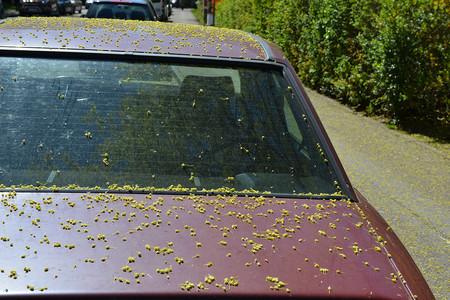 Cómo lograr que las alergias primaverales no vivan en tu coche torturándote