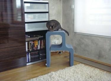 Catworks, un rascador para el gato con la inicial de su nombre