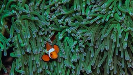 No hay salvación para el protagonista de 'Buscando a Nemo'