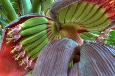 Belleza en estado puro: así de sorprendentes son algunos alimentos en su entorno natural