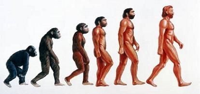 ¿Del Homo Habilis al Homo Erectus? Parece que no