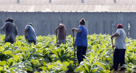 Ag for Hire, una app que ayuda a los migrantes a encontrar trabajo