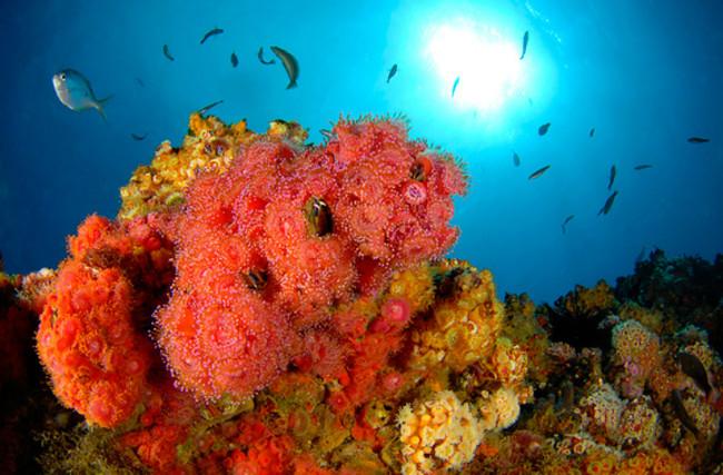Arrecife Juan Fernandez
