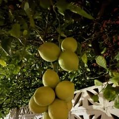 Foto 10 de 23 de la galería iphone-11-modo-noche en Xataka