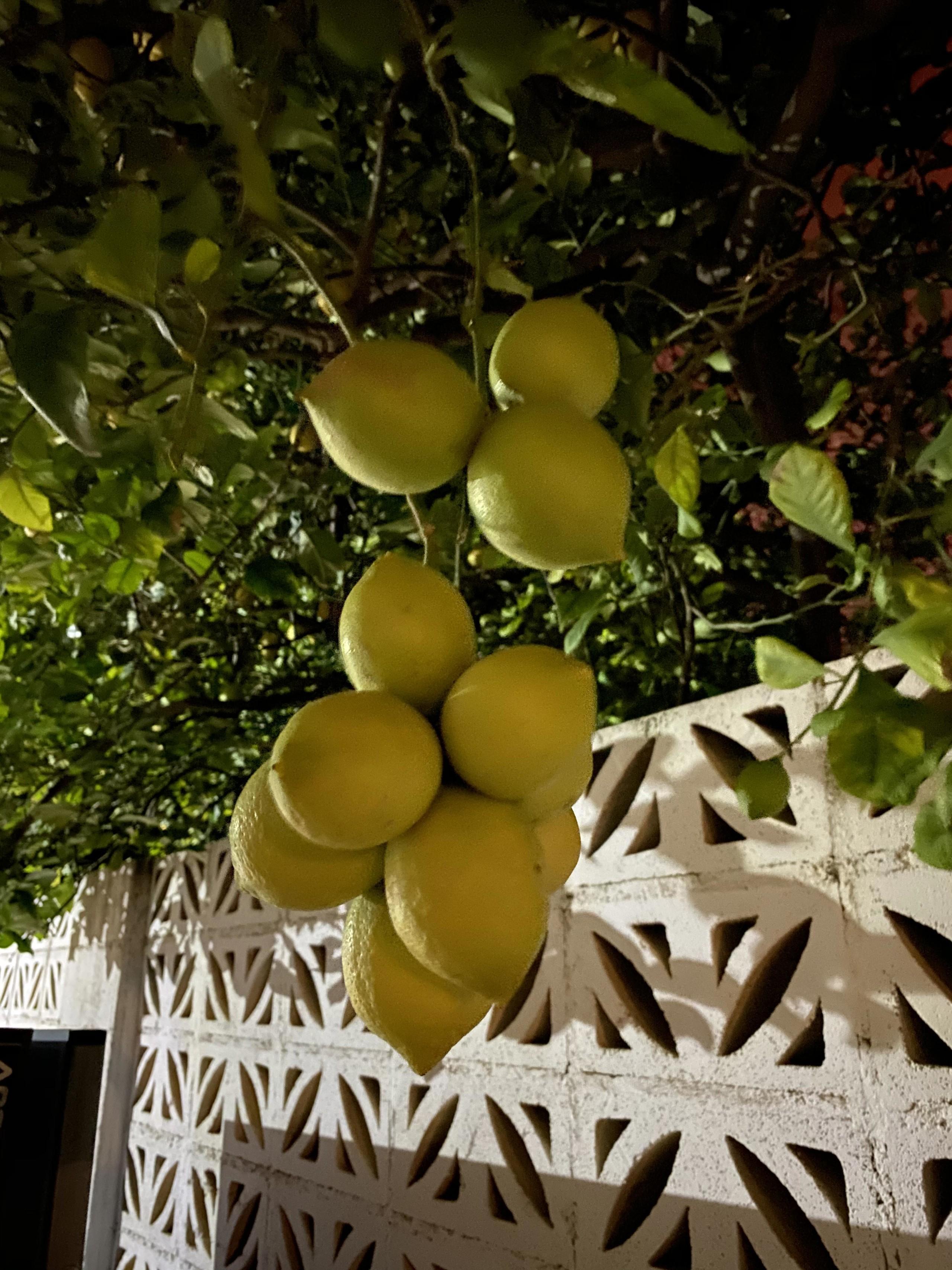 Foto de iPhone 11, modo noche (10/23)