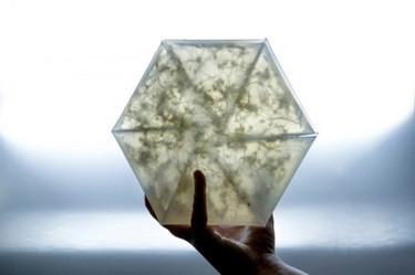 La belleza está en las cosas pequeñas, como este invernadero inspirado en el origami