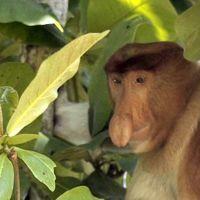Borneo, vídeos inspiradores