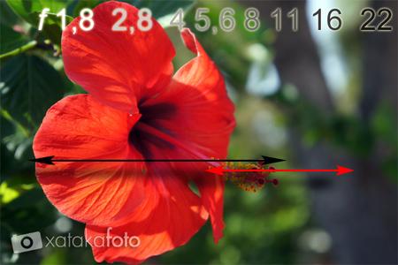 Ejercicios para controlar la profundidad de campo en nuestras fotografías