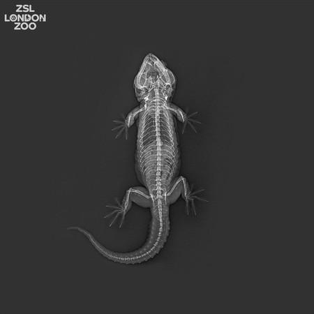 Gecko Rx