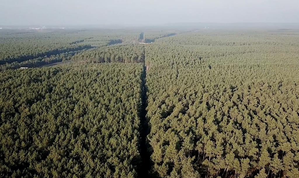 Alemania pausa la construcción de la Tesla Gigafactory: más de 90 hectáreas de bosque están siendo deforestadas