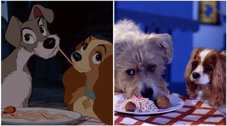 'La dama y el vagabundo': Disney ha usado perros de verdad en la nueva versión del clásico animado