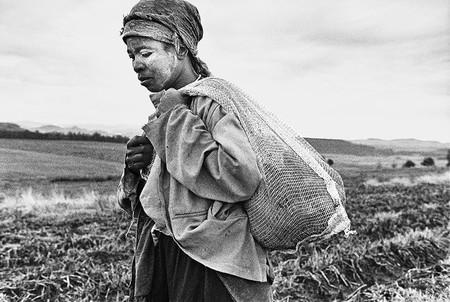 Anna Harvesting Potatos 2002