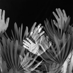 Foto 9 de 16 de la galería imogen-cunningham-o-cuando-una-fotografia-te-cambia-la-vida en Xataka Foto