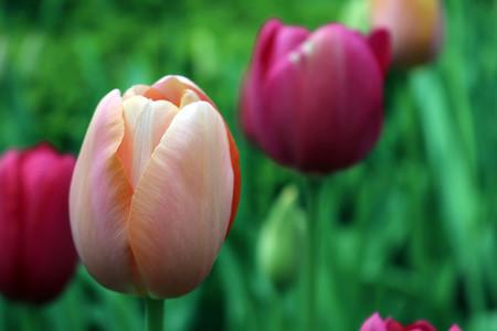 Trucos Mejores Fotos Flores 10