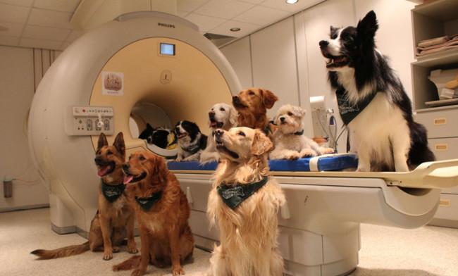 El cerebro de los perros funciona de forma parecida al humano cuando les hablamos