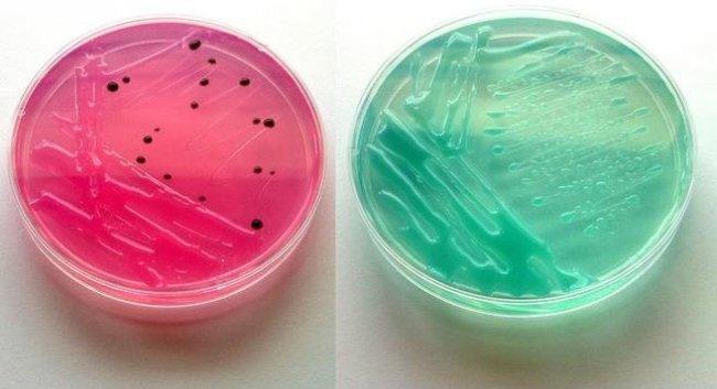 Jabones bacterianos